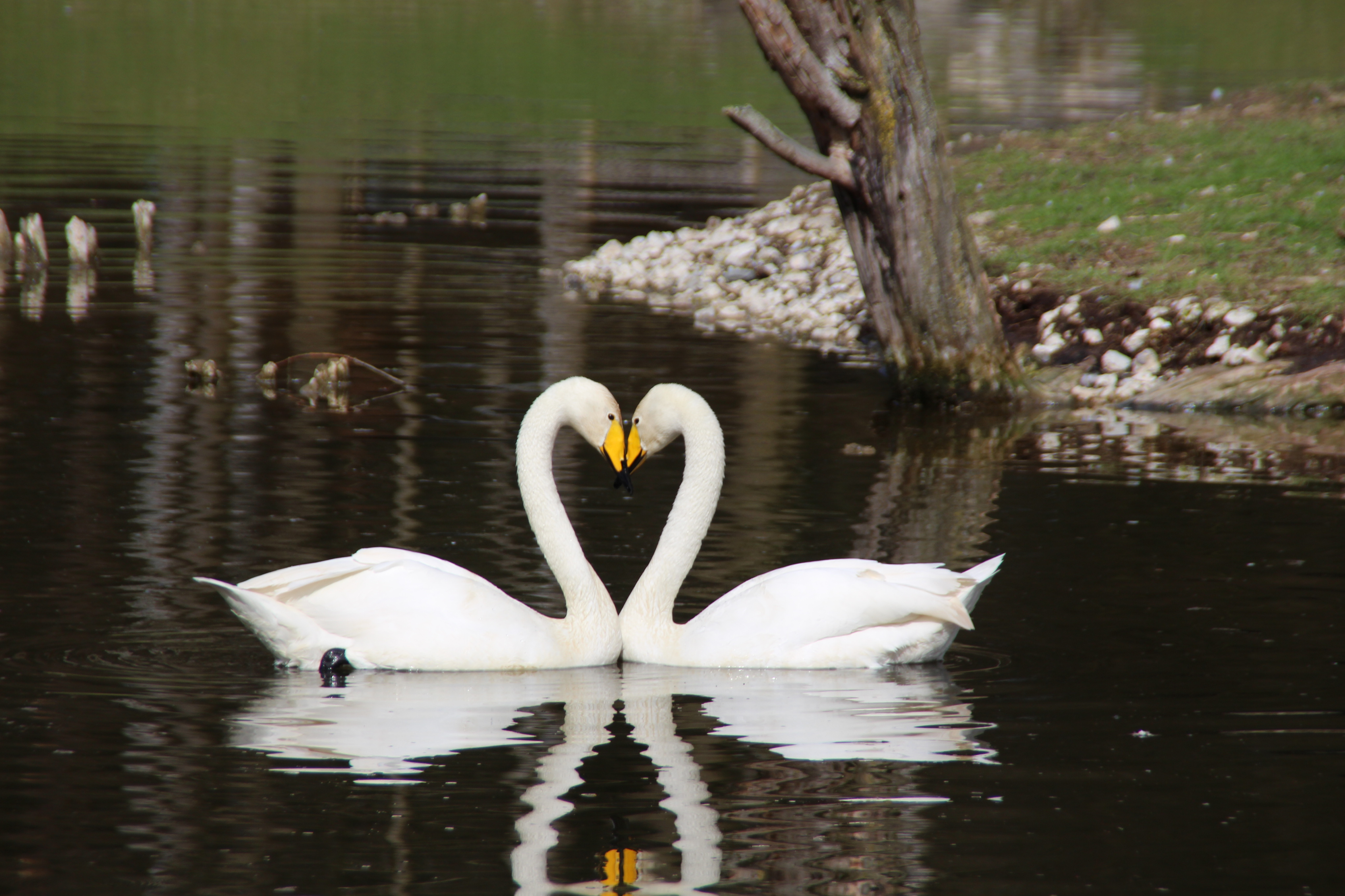 Love is in the air – Texas & Blue Baheeja from Shamrock River