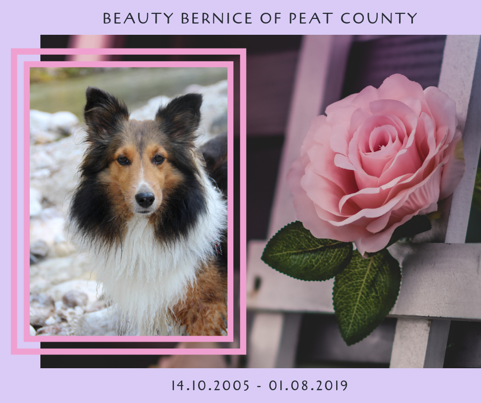 Beauty Bernice of Peat County – meine kleine Kämpferin